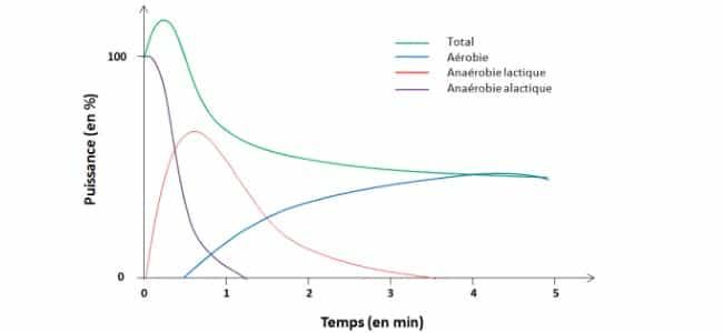 aerobie anaerobie alactique
