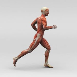 contraction musculaire football