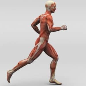 Les différents types de contraction musculaire
